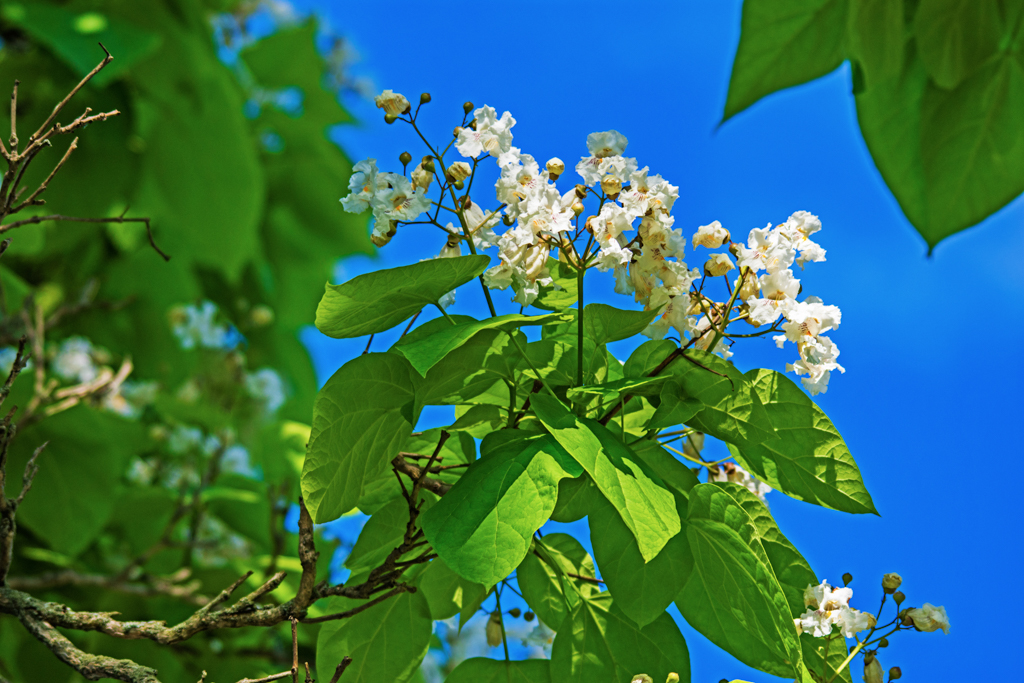 A Flower tree against blue sky
