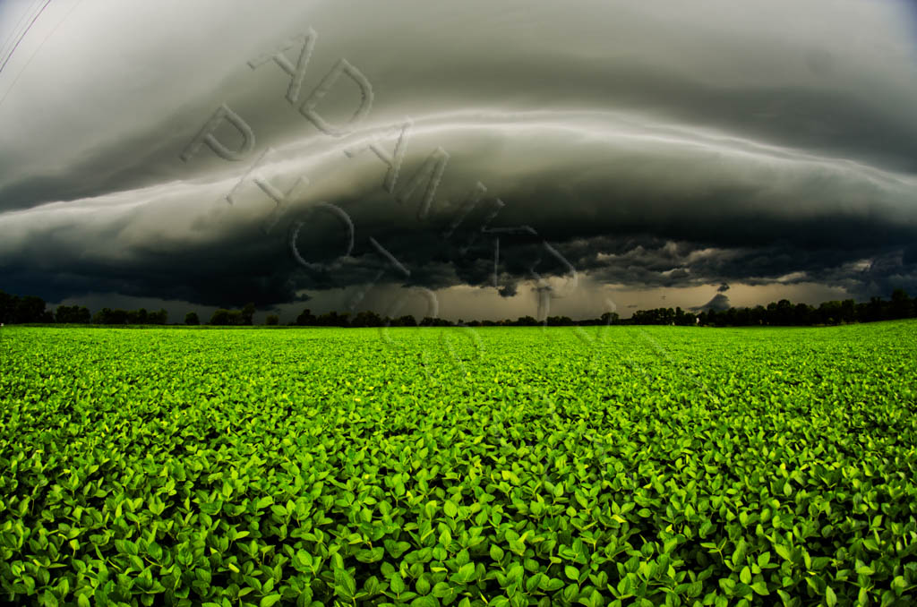 Shelf cloud over corn field