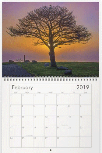 Leafless tree silhouetted by purple and orange sunset across a foggy lake